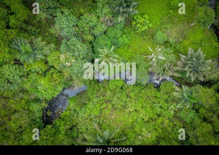 aerial view into the jungle from above