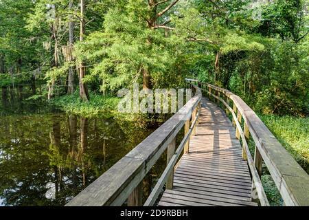 Louisiana Saint St. Tammany Parish Mandeville, Northlake Nature Center centre walk boardwalk, - Stock Photo