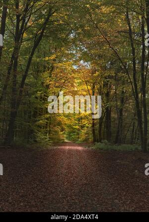 Path on an autumnal day in a forest in Germany