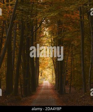 Hiking path on an autumnal day in a forest in Germany