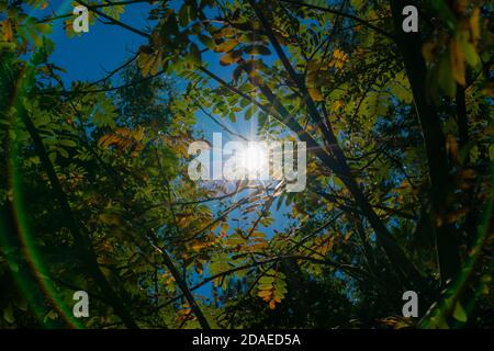 Tree leaves in autumn, first discolored leaves on the tree, The sun shines through the treetop, Circle by light reflections - Stock Photo