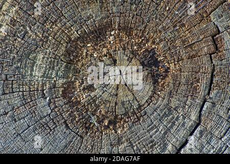 texture of an old rotten tree trunk