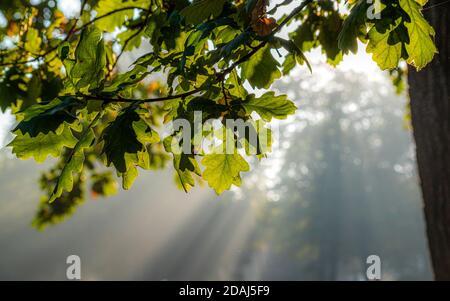 Morgens zum Sonnenaufgang im Park, grüne Bäume und Sonnenstrahlen durch die Äste, Leipzig, Clara-Zetkin-Park - Stock Photo