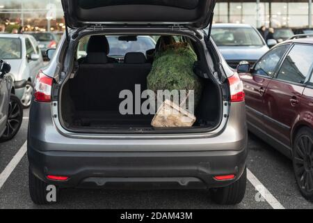 Packaged Christmas tree in the trunk of a car