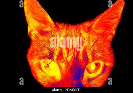 Funny cat in scientific high-tech thermal imager on black background isolated