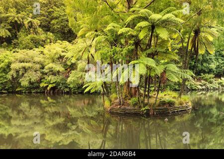 Pukekura Park, Botanical Garden, New Plymouth, Taranaki, North Island, New Zealand