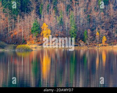 Beautiful late Autumnal lake reflection Lokve lake Lokvarsko jezero in Croatia Europe - Stock Photo