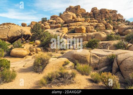 Rocks and trees along the trail in Joshua Tree National Park, California