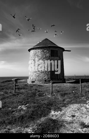 Beautiful black and white picture of pigeons flying ovet windmill located at Apúlia in Portugal