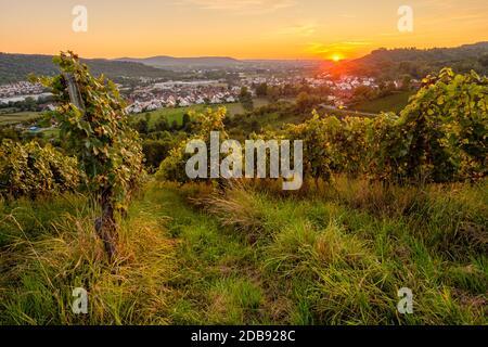 Sonnenuntergang im Weinberg Weitwinkel Landschaft - Stock Photo