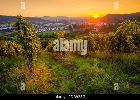 Weinberg Sonnenuntergang im Sommer mit Sonnen - Stock Photo