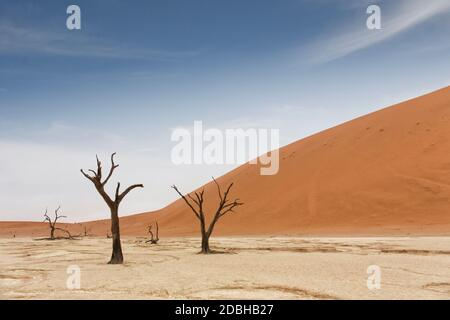 Deadvlei is a white clay pan located near the more famous salt pan of Sossusvlei, inside the Namib-Naukluft Park in Namibia. Also written DeadVlei or