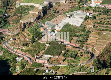 View over the vineyards of the Madeira Wine Company, Estreito de Camara de Lobos, Madeira, Portugal