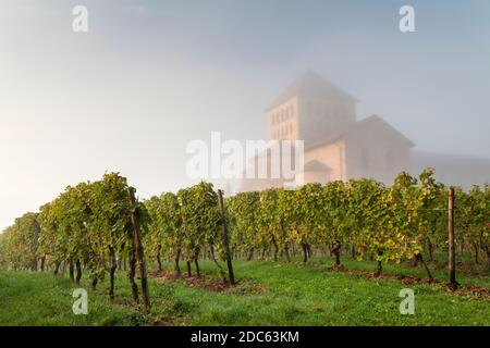 geography / travel, Germany, Hesse, Geisenheim, basilica St. Aegidius in the fog, Mittelheim, Oestrich, Additional-Rights-Clearance-Info-Not-Available