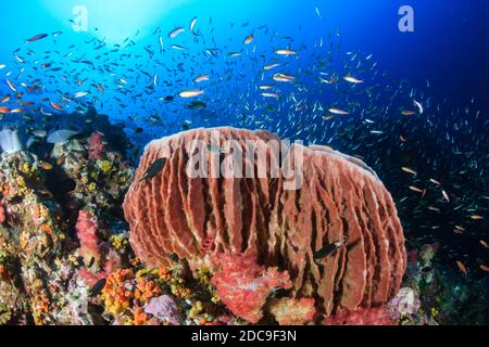 Colorful tropical fish swimming around a tropical coral reef in Thailand