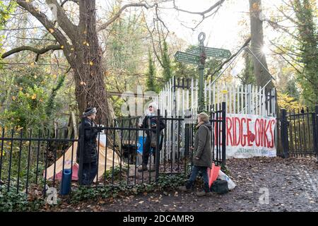 Activists protest in Sydenham Hill Woods against the proposed felling of two 100+ year-old oak trees, threatened by Southwark Council because of their proximity to 'Pissarro's' footbridge whose renovation has been deemed necessary by the local authority, on 17th November 2020, in London, England. The Nunhead to Crystal Palace (High Level) railway once passed through the Wood and Impressionist artist  Camille Pissarro (1830–1903) famously painted a railway landscape from the bridge in the 1870s. Sydenham Hill Wood forms part of the largest remaining tract of the old Great North Wood, a vast are - Stock Photo