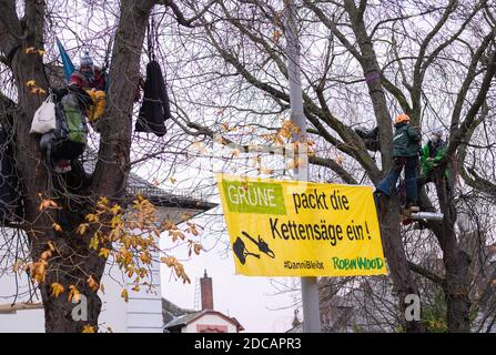 Wiesbaden, Germany. 20th Nov, 2020. Activists stop with a demo banner 'Green packs the chainsaw! #Danni stays Robin Wood' trees. Activists of Robin Wood, environmental and nature conservation organisation, have occupied two trees in front of the party headquarters of the Hessian Greens in the state capital. The organisation is protesting against the clearings in connection with the expansion of the A49 and wants to remind the Greens in Hesse of their political responsibility. Credit: Andreas Arnold/dpa/Alamy Live News - Stock Photo