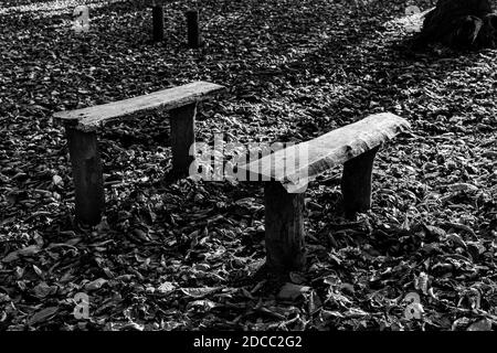 Two benches in a woodland. Stock Photo