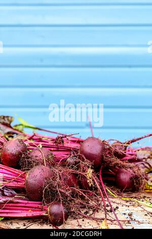 Fresh beets with tops on the table. - Stock Photo