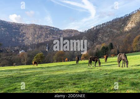 Pferde grasen auf der grünen Weide, Nachrodt-Wiblingwerde, Nordrhein-Westfalen, Deutschland  |  horses grazing on the green in Nachrodt-Wiblingwerde, Stock Photo