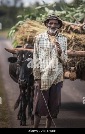Portrait of a man with hiz Zebu on RN7 (Route Nationale 7) near Ambatolampy in the Central Highlands of Madagascar