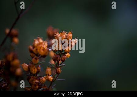 Close up on endemic vegetation