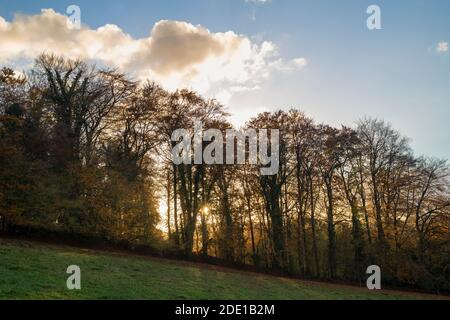 Late afternoon autumn sunlight on the chiltern way silhouetting trees.  Fingest, Buckinghamshire, England