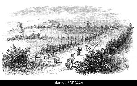 A 19th Century view of Sulby Hedges, Sibbertoft, set in the middle of the Northamptonshire countryside, commemorating the Battle of Naseby a decisive engagement of the First English Civil War, fought on 14 June 1645 between the victorious Parliamentarian New Model Army, commanded by Sir Thomas Fairfax and Oliver Cromwell and the  main Royalist army of King Charles I. With many sheep farmed in the area the hedge would have been robust and stock proof, preventing movement by men or horses, but giving no shelter from musket fire - Stock Photo
