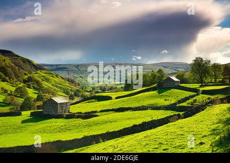 Hay Barns in Upper Swaledale in Autumn, Yorkshire Dales, England, UK