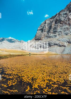 Yellow autumn leaves floating on lake's water. Mountain lake landscape between Bolkar Mountain and Taurus Mountain. Panoramic view of black lake at su