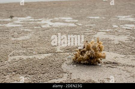 Sea anemone on the beach with copy space.