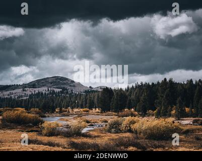 A river, autumn foliage, pine trees and a mountain under dramatic, stormy skies with light shining through the clouds at Tuolumne Meadows in Yosemite