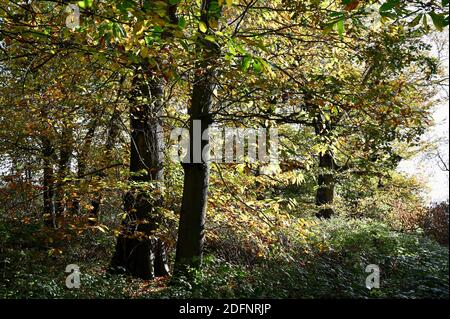 Autumn Leaves, Foots Cray Meadows, Sidcup, Kent. UK