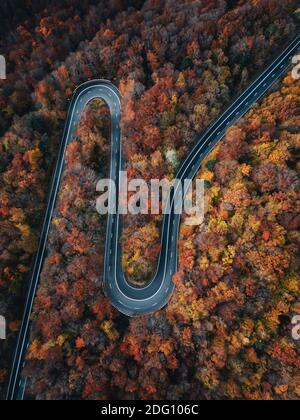 Aerial view of road in beautiful autumn forest at sunset. Beautiful landscape with empty rural road, trees with red and orange leaves. Romania,Transy