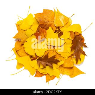 Various dried leaves mix isolated on white - Stock Photo