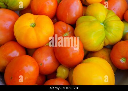 Large group of multicolored, organic tomatoes at farm market