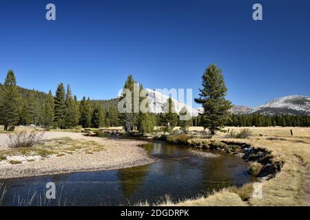 View of Tuolumne Meadows in Fall / Autumn with Lembert Dome and the Tuolumne River surrounded by yellow grass. Yosemite National Park, California.
