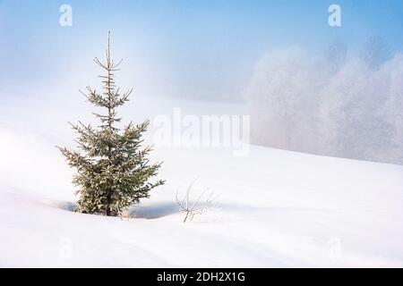spruce tree in mist on a snow covered hill. fairy tale winter mountain scenery. frosty weather on a sunny morning