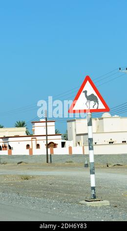 Camel road sign in Oman. - Stock Photo