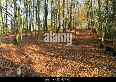 Photos for a feature on Wellesley Woodland, Aldershot - Autumn weekend walks feature. Woodland trails.