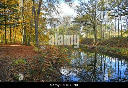Photos for a feature on Wellesley Woodland, Aldershot - Autumn weekend walks feature. Basingstoke Canal.