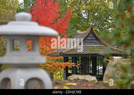 Feature on Stoke Park, Guildford - Autumnal colours, as work continues to restore and improve the oriental gardens.     Guildford, Surrey.  Picture taken 20th October 2020