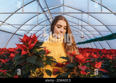 Woman in greenhouse in yellow sweater near red poinsettia in pots.