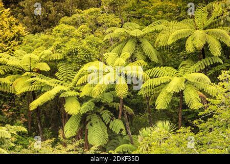 Pukekura Park, Botanical Gardens, New Plymouth, Taranaki, North Island, New Zealand