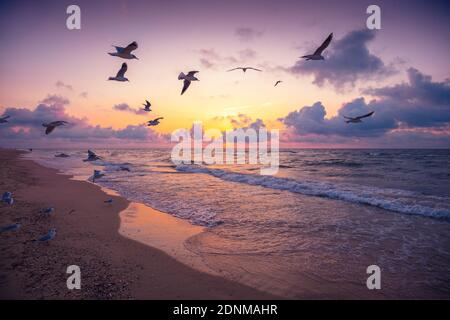 Seascape in the evening. Sunset over the sea. Seagulls flying over the beach. Atlantic ocean in the evening. Porto, Portugal
