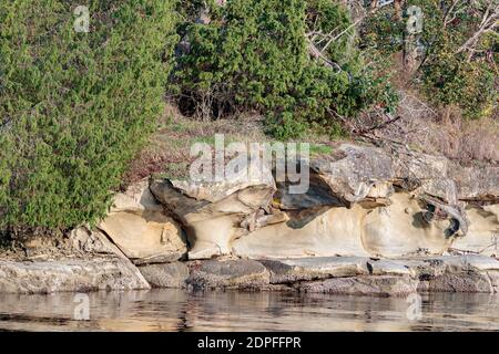 Low angle afternoon light casts a golden glow on the smooth vertical surfaces of a sandstone shore, overhung with eroded arches backed by forest. Stock Photo