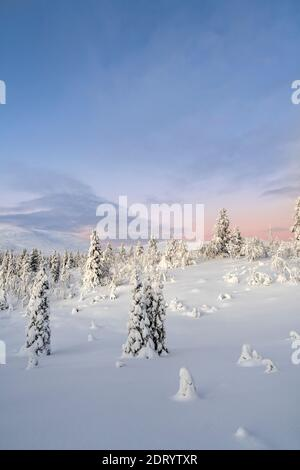 Midwinter landscape in Pallas Yllas National Park of Finnish Lapland. While sun doesn't rise, for few precious hours the light is beautiful.