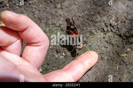 butterfly on a woman's hand in a nature reserve