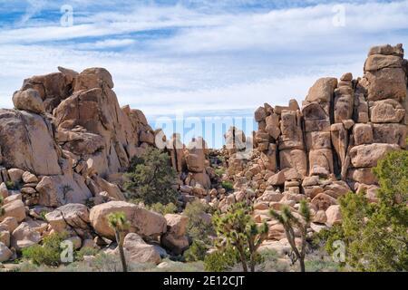 Amazing rock formations andjoshua trees at sunny Joshua Tree National Park