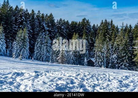 Frisch verschneite Landschaft mit Haus am Waldrand. snowy landscape with a holiday home at the edge of forest, a sunny day. winter wonderland Austria